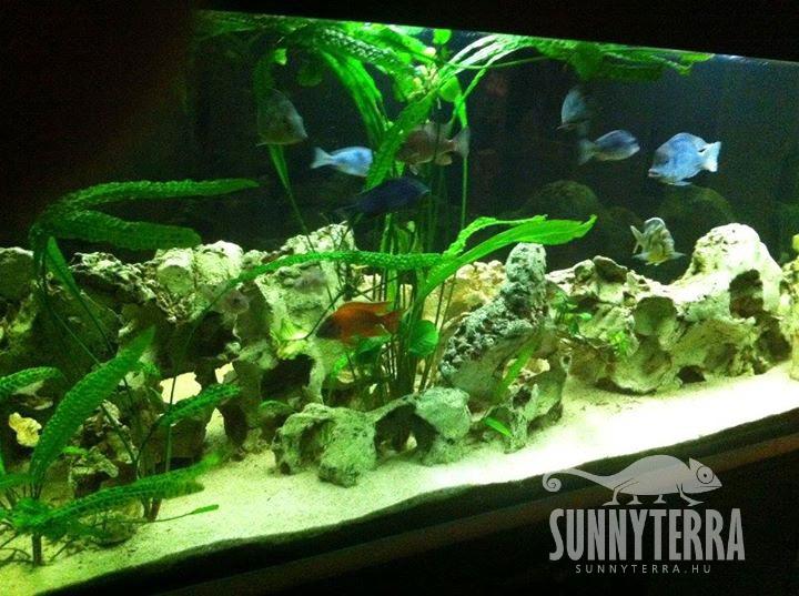 Egyedi méretű akvárium